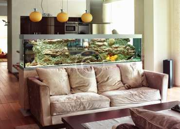 Freshwater Aquarium Setups and Care
