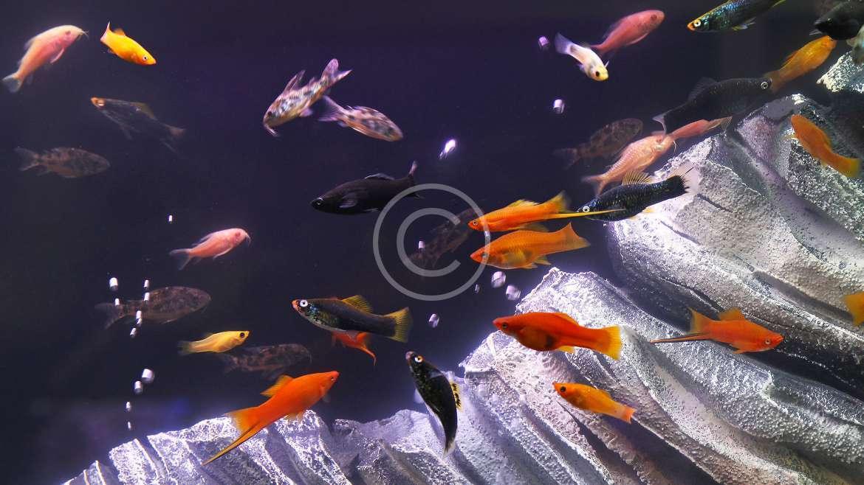 Vendita Pesci Piante e Accessori