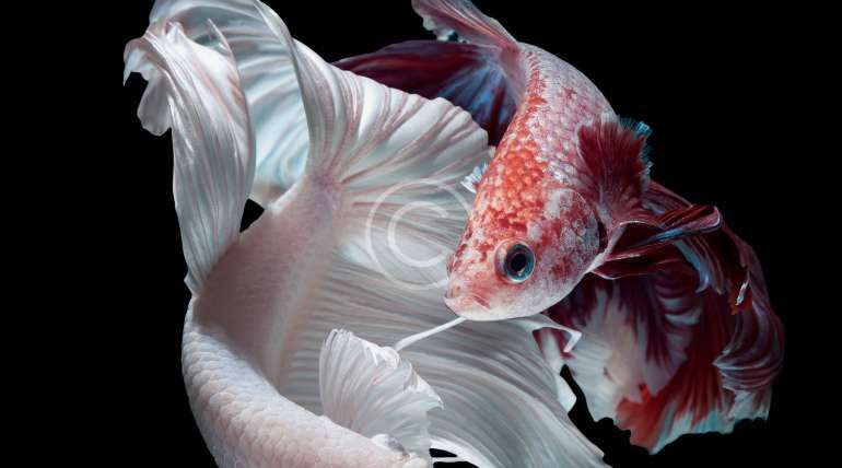 Acclimating Saltwater Fish